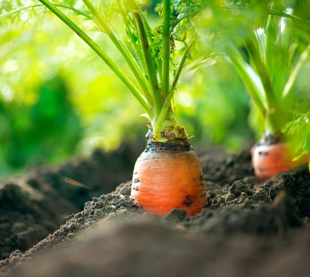 5-perguntas-e-respostas-sobre-alimentos-organicos.jpeg