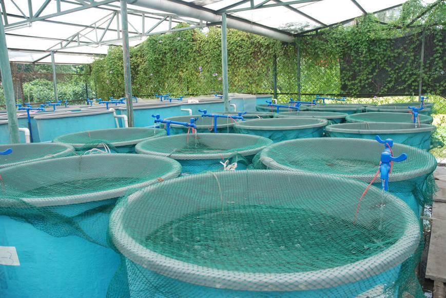 saiba-a-importancia-da-qualidade-da-agua-na-piscicultura.jpeg