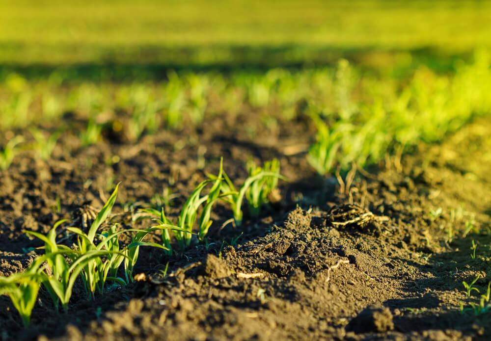 3-passos-para-aumentar-a-producao-agricola.jpeg