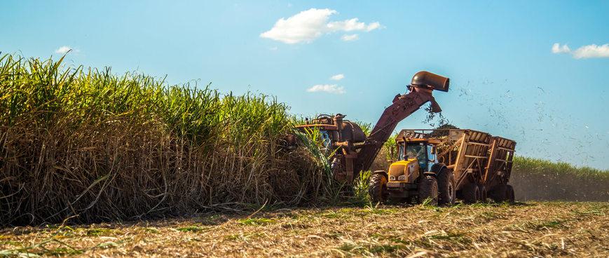 os-8-principais-produtos-agricolas-no-brasil.jpeg