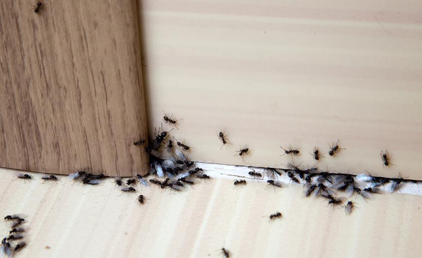 infestacao-de-insetos-quais-sao-as-principais-causas.jpeg