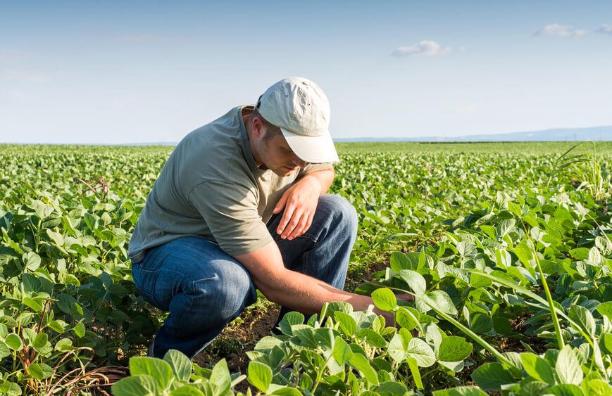 4-solucoes-de-bioinovacao-na-agricultura.jpeg