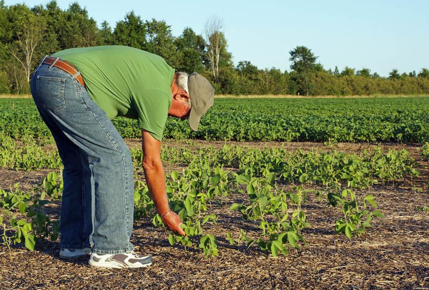 quais-os-principais-impactos-da-seca-na-agricultura.jpeg
