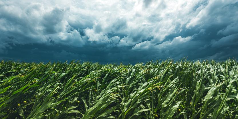 mudanças climáticas na agricultura