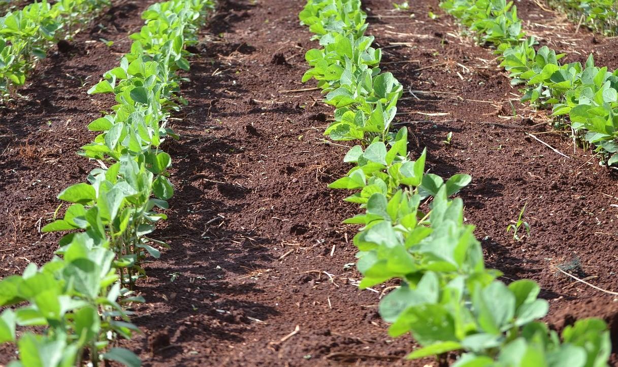 micronutrientes das plantas